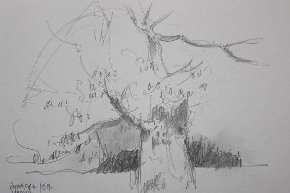 Baum im Kloster
